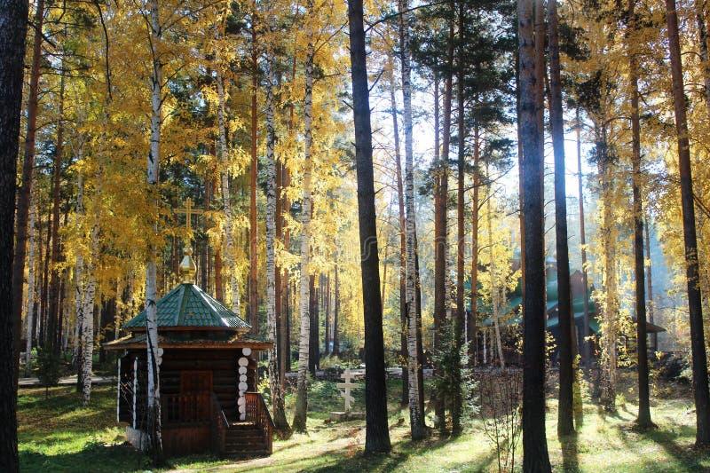 kyrklig skog fotografering för bildbyråer