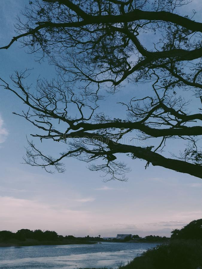 Kyssa dig under ett träd royaltyfria bilder