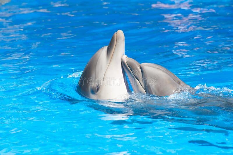 kyssa för delfiner arkivbilder