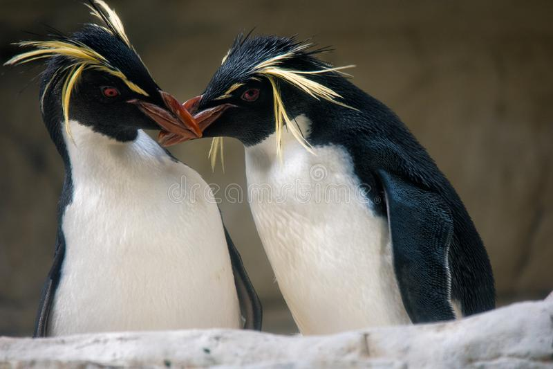 Kyssa för två pingvin royaltyfri bild