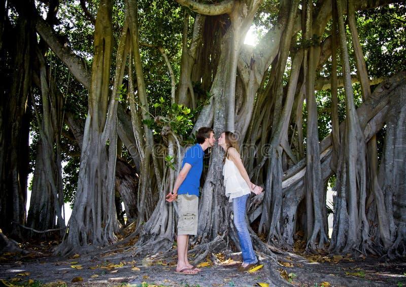 kyssande tree för par under arkivbilder