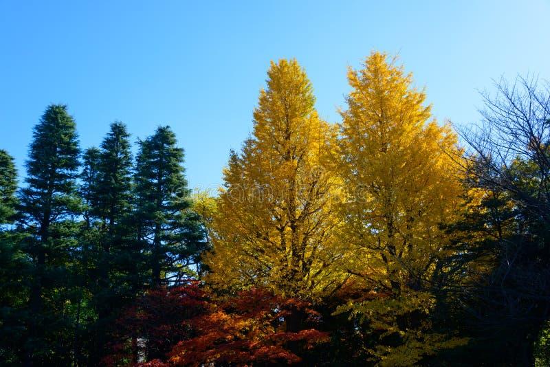 Kyu-Furukawa庭院在秋天在东京 库存图片