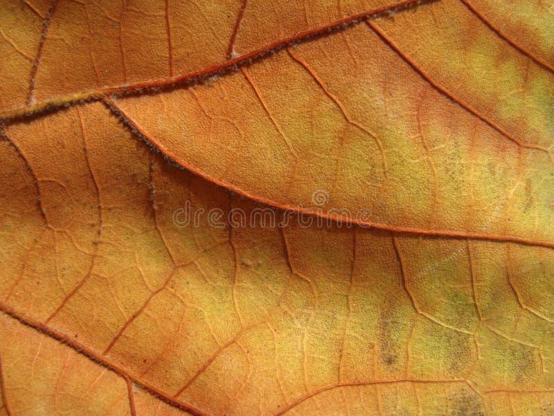Download Lámina foto de archivo. Imagen de ecológico, ambiente - 7150760