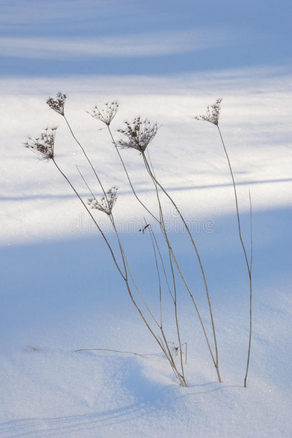 Lámina de la hierba seca foto de archivo