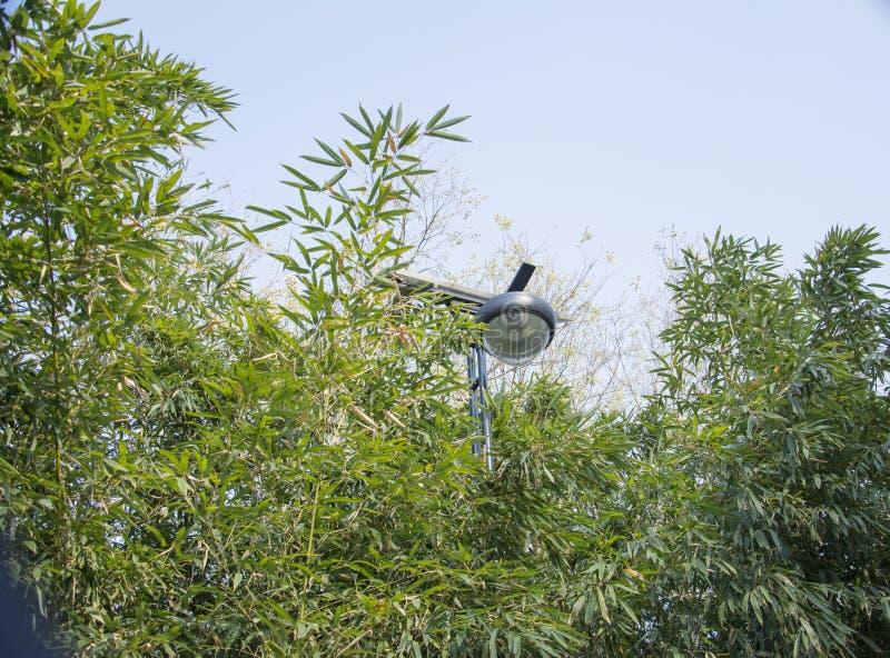 Lámpara de bambú del bosque y de calle imágenes de archivo libres de regalías