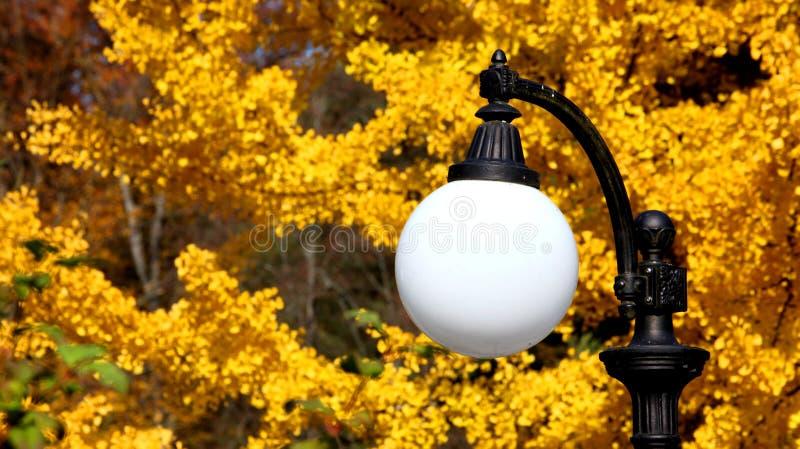 Lámpara de calle blanca contra la perspectiva del follaje amarillo imagen de archivo libre de regalías