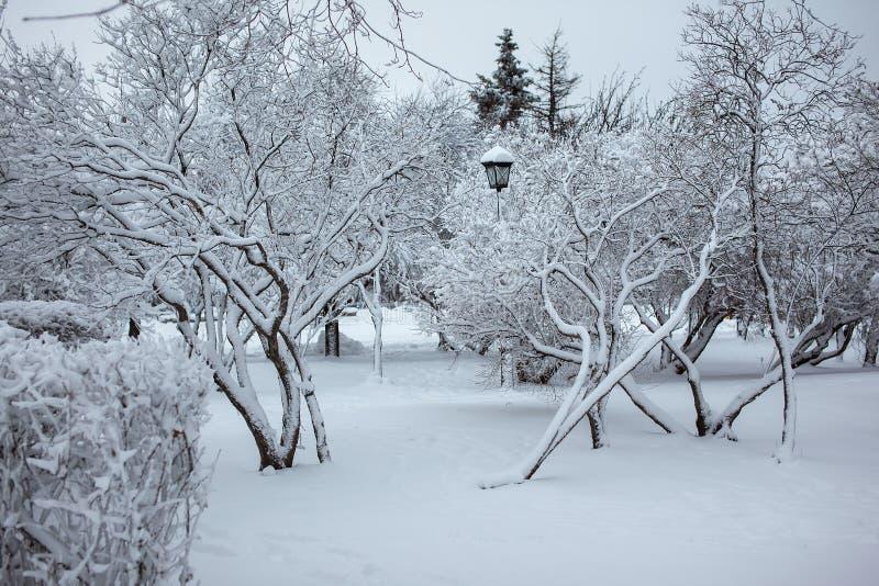 Lámpara de calle en un parque de la nieve imágenes de archivo libres de regalías