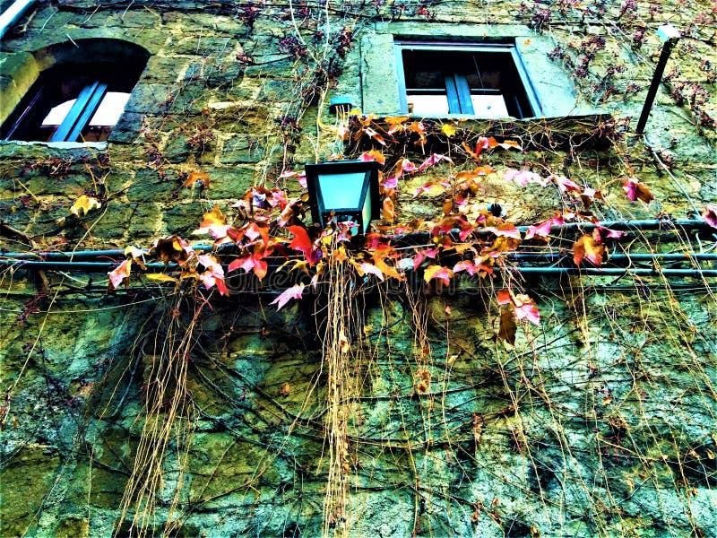 Lámpara de calle, hiedra roja y amarilla, ventanas y pared medieval imágenes de archivo libres de regalías