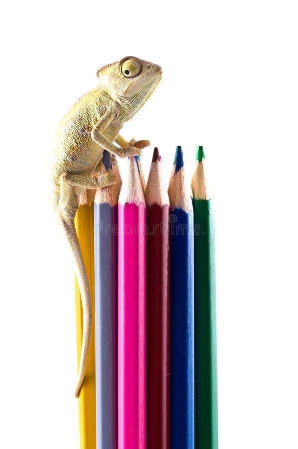 Lápices del lagarto y del color. fotografía de archivo