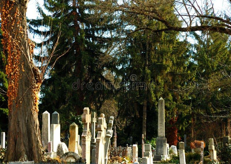Lápida mortuaria en la sombra del pino fotografía de archivo