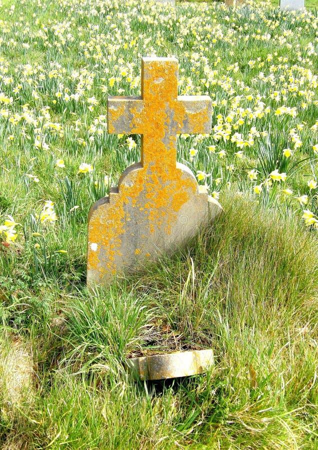 Lápida mortuoria con los narcisos imagen de archivo libre de regalías