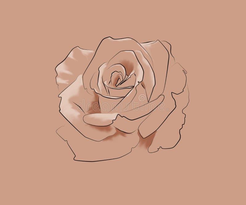 A lápis desenho de uma rosa ilustração royalty free