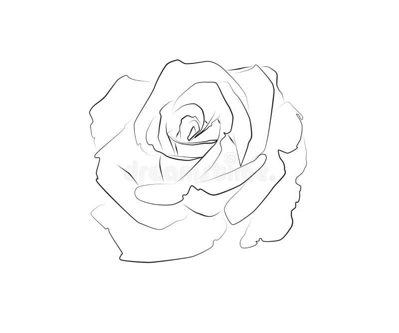 A lápis desenho de uma rosa ilustração do vetor