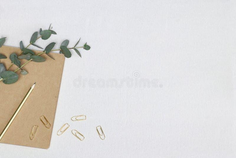 Lápis e clipes de papel dourados na nota com ramo do eucalipto e fundo branco imagem de stock
