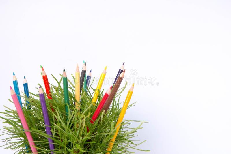 lápiz del color y arbusto verde foto de archivo libre de regalías