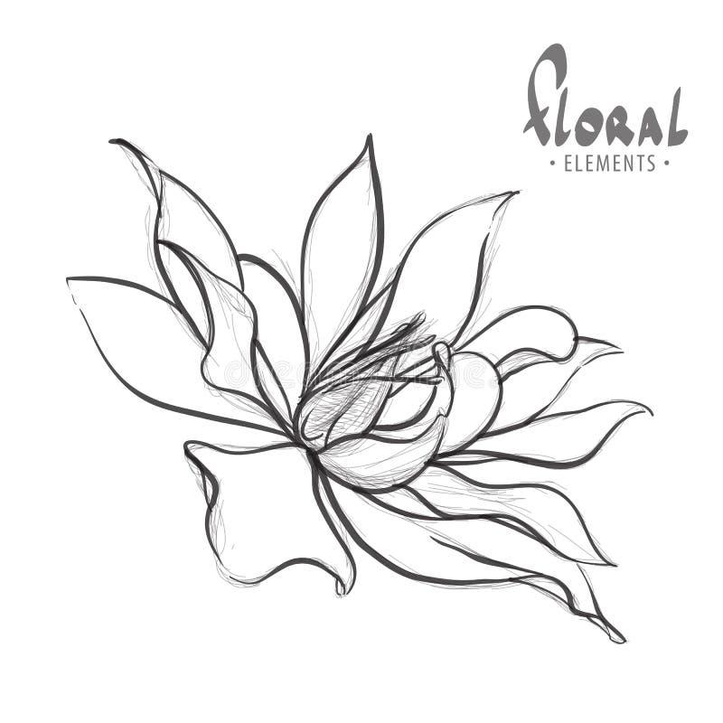Lápiz dibujado loto delicado stock de ilustración
