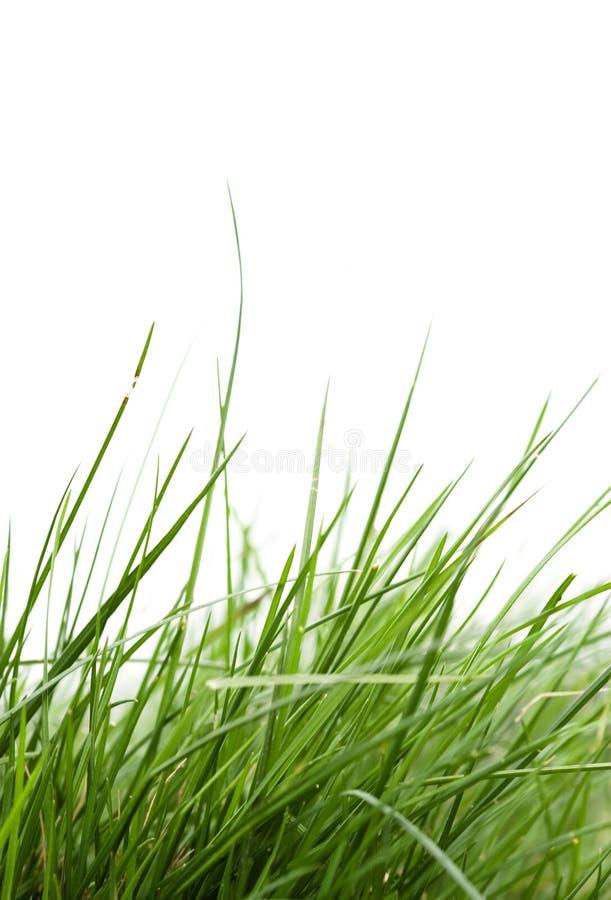 Lâmina da grama no vento fotos de stock