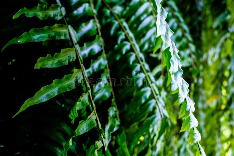 Lâmina da samambaia no jardim fotografia de stock