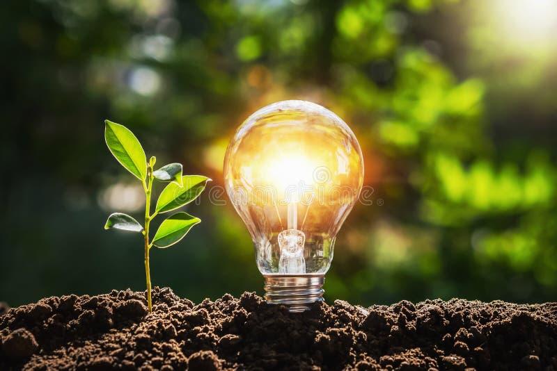 Lâmpada com luz solar no solo conceito de economia mundial e energia fotografia de stock royalty free