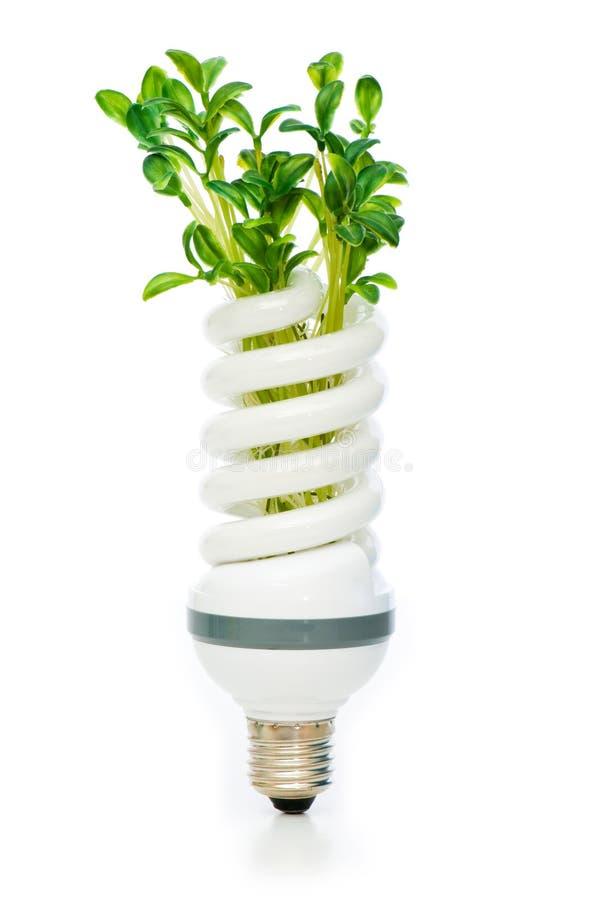 Download Lâmpada Da Economia De Energia Com Seedling Verde Imagem de Stock - Imagem de isolado, nave: 12813195