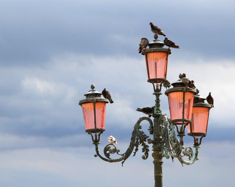 Lâmpada de rua antiga com os pombos em Veneza fotografia de stock royalty free