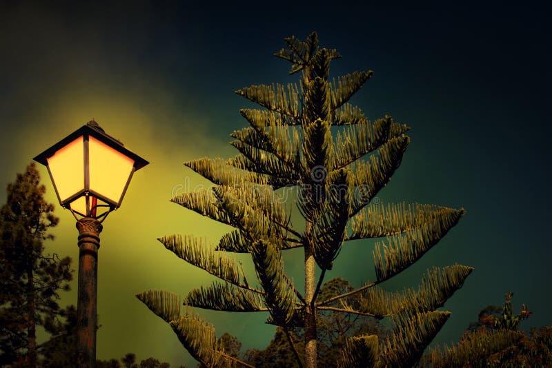 L?mpada do pinho e de rua na noite fotografia de stock royalty free