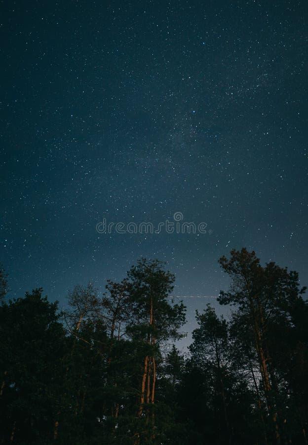 Lâmpadas e carros do cenário da noite… na rua céu noturno estrelado atrás das árvores Estrelas fotos de stock