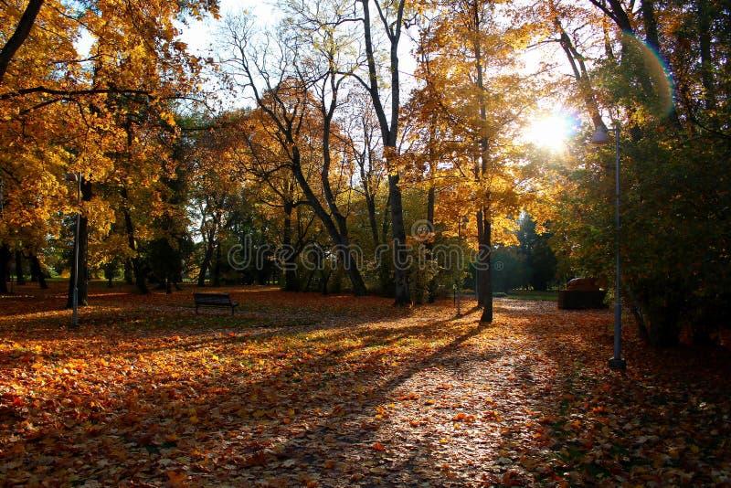 Löwenruh-Park, Tallinn, Estland auf Herbst stockfotos
