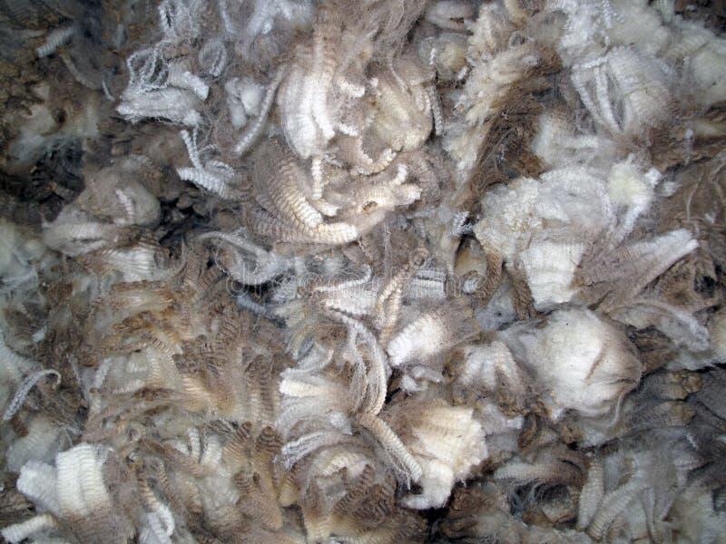Lãs cortadas cruas dos carneiros fotografia de stock