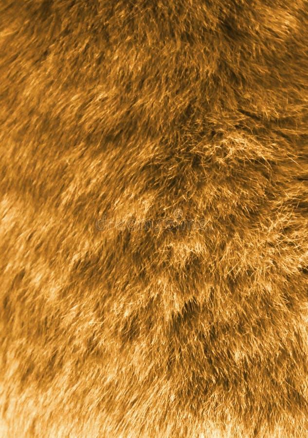 Lãs da raposa imagem de stock