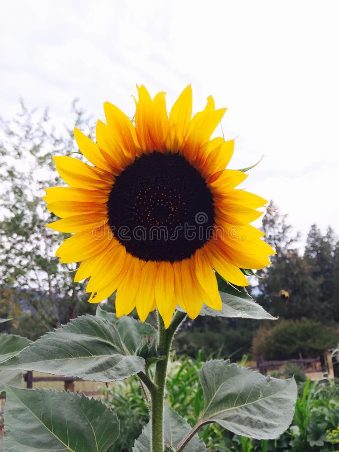 Lächelnde Blume lizenzfreies stockbild