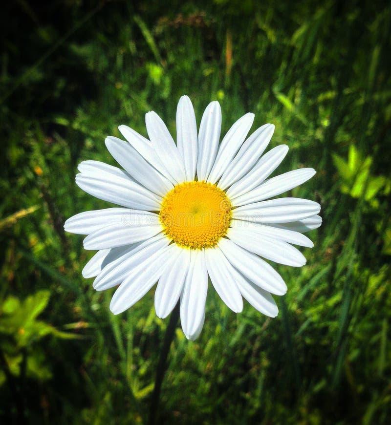 Lächelnde Blumenblätter lizenzfreies stockbild