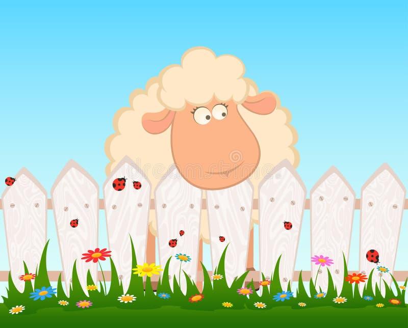Lächelnde Schafe nach einem Zaun lizenzfreie abbildung