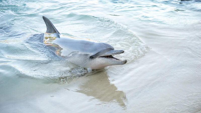 Lächelnder Delphin stockfotografie