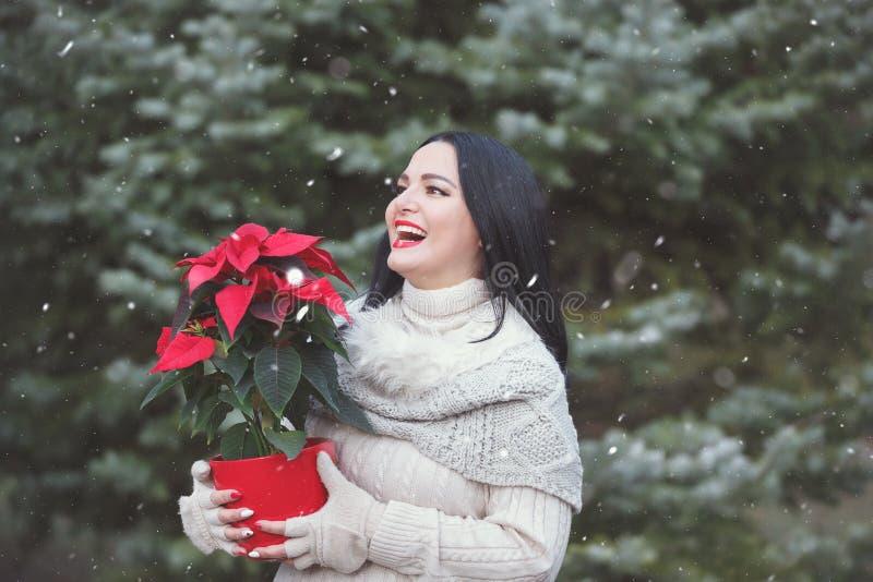 Lächelnder Frauen-Holding-Topf mit Weihnachtsroter Poinsettia-Anlage stockfoto