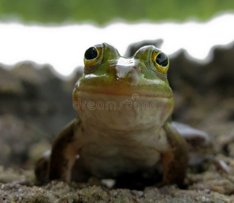 Lächelnder Frosch