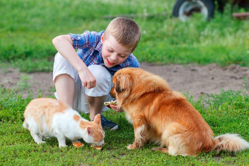 Lächelnder kleiner Junge zieht obdachlosen Katzen- und Rothaarigestreunenden hund im Yard ein stockbild