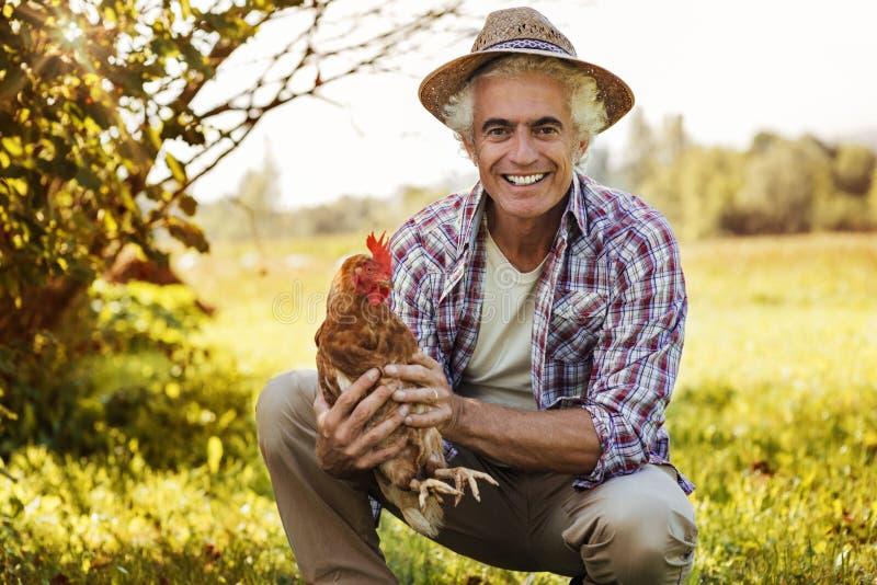 Lächelnder Landwirt, der ein Huhn hält stockbilder
