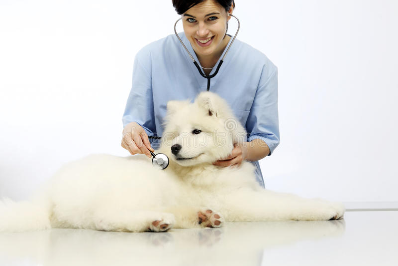 Lächelnder Untersuchungshund des Tierarztes auf Tabelle in der Tierarztklinik lizenzfreie stockbilder