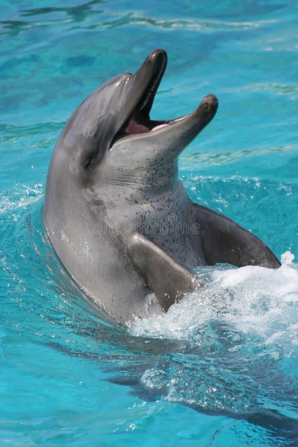 Lächelndes Delphinportrait stockfotos