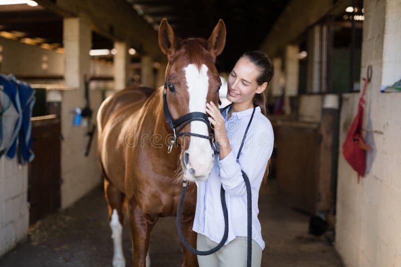 Lächelndes strocking Pferd des Tierarztes im Stall stockfotos