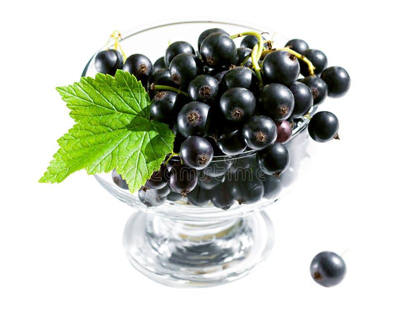 Läcker efterrätt av den nya svarta vinbäret royaltyfri fotografi