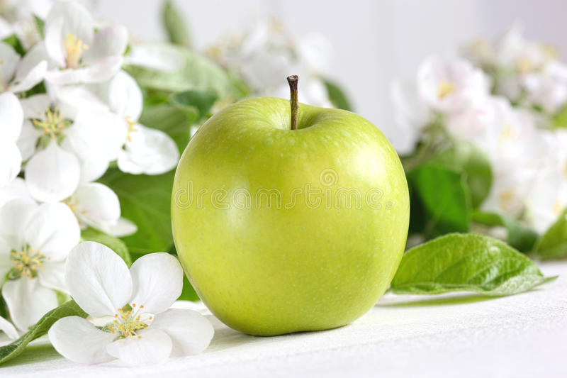 Läckert grönt äpple med blomningar arkivfoton