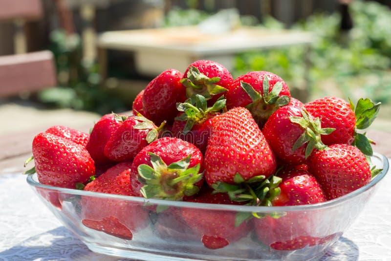 Läckra nya jordgubbar arkivfoto