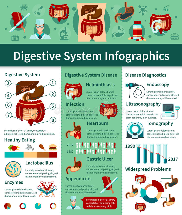 Lägenhet Infographics för digestivkexsystem stock illustrationer