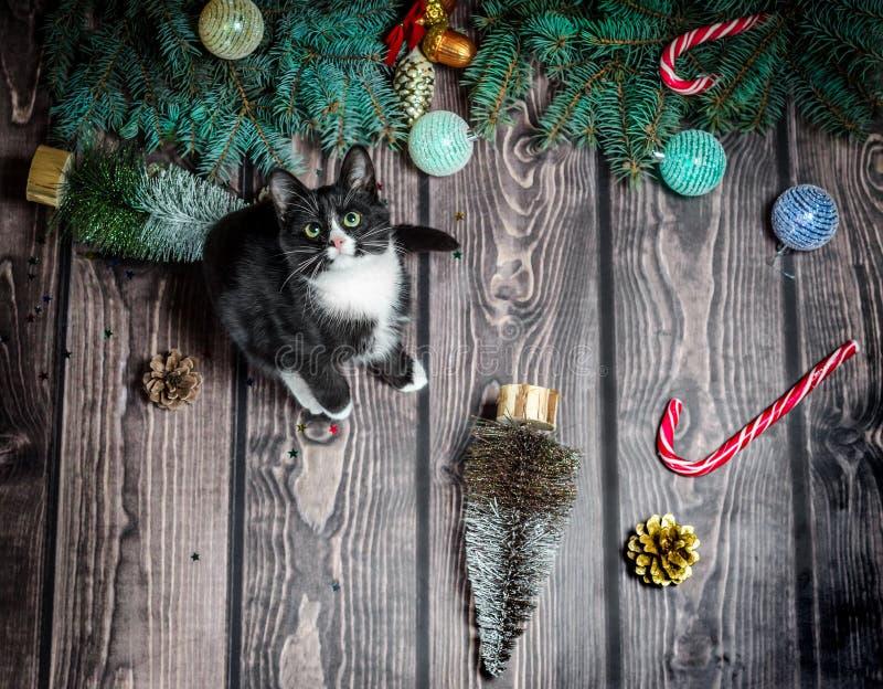 Lägenheten för det nya året lägger svartvit katt på ett trägolv med julpynt och granfilialer arkivbild