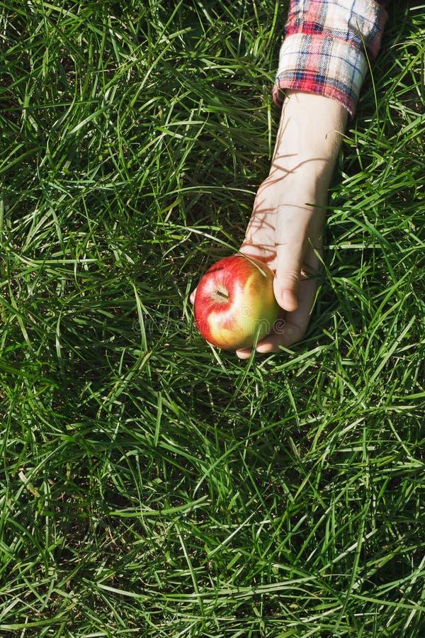 Lägenheten lägger med handen för kvinna` som s rymmer det röda mogna organiska äpplet royaltyfri fotografi
