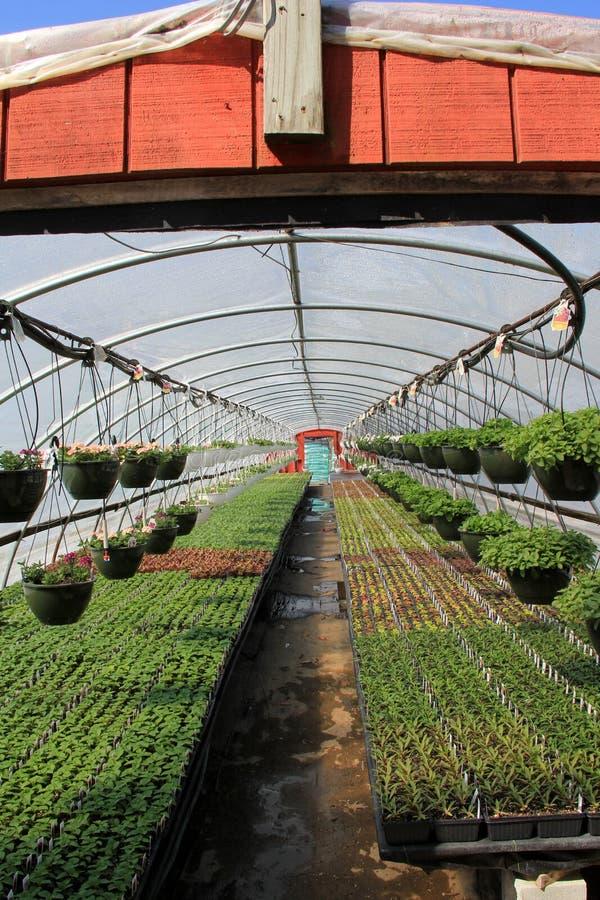 Lägenheter av växter under värme av växthuset royaltyfria bilder