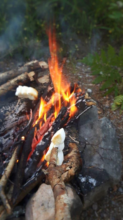 Lägereld med marshmallower och flammor i det utomhus- fotografering för bildbyråer