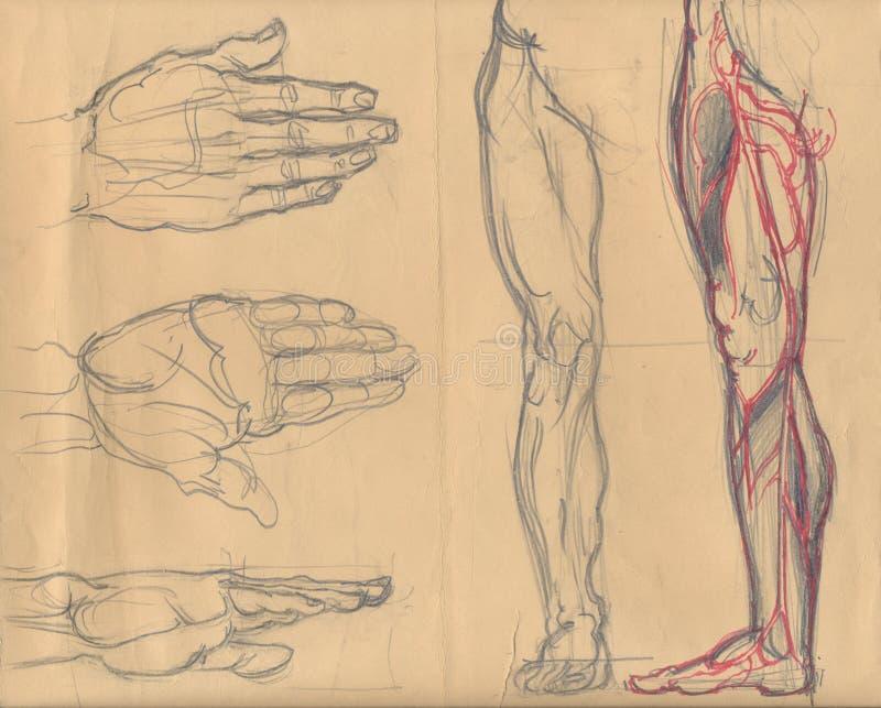 Lägga benen på ryggen och gömma i handflatan skissar stock illustrationer
